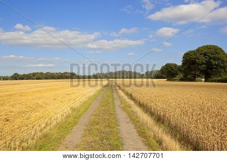 Rural Harvest Landscape