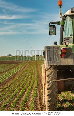 Modern agriculture with tractor on a salad field