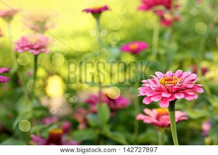 pink flowers foliage green beautiful floral background