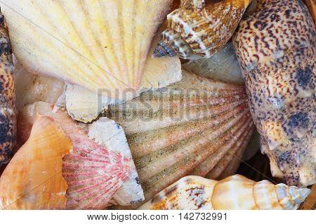 Shells From Beach