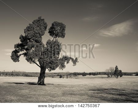 Old tree on the Manassas Battlefield in Virginia
