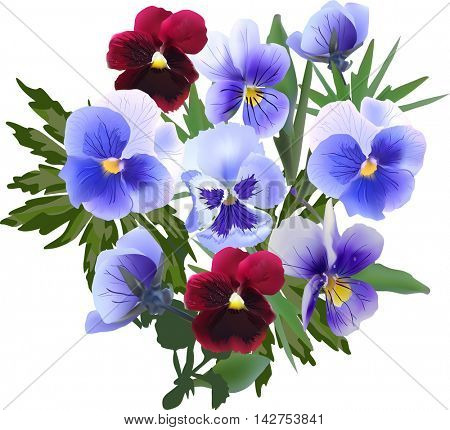 illustration with garden violet flowers isolated on white background