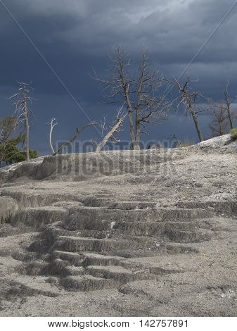 Dead trees and a grey landscape at Yellowstone National Park during a coming storm have the feel of a volcanic eruption.