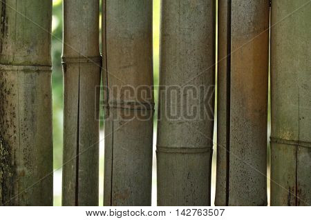 Close-up photograph of a backlit bamboo fence.