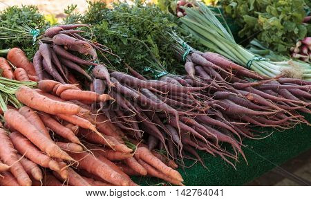 Mix of colorful orange, red, yellow and white carrots grown and harvested in Southern California and displayed at a farmers market.