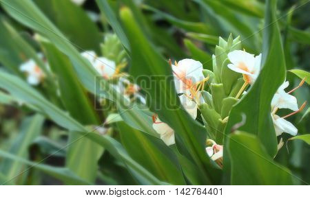Picture of three orange and white bundles of flowers in a row.