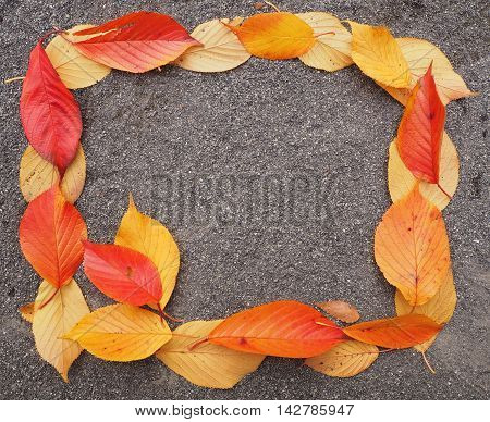 Colorful of dry leaf on the floor background