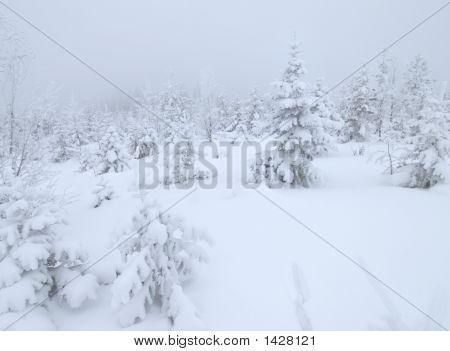 Winter In Sweeden