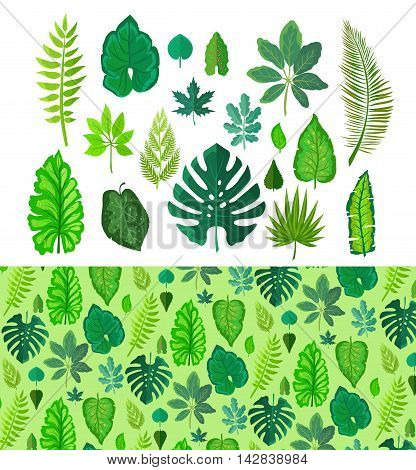 Set of tropical leaves isolated on white. Collection of green tree leaves. Natural green fresh leafs. Leafs set element floral color garden art. Natural green tropical set leaves. Flat leafs. Vector