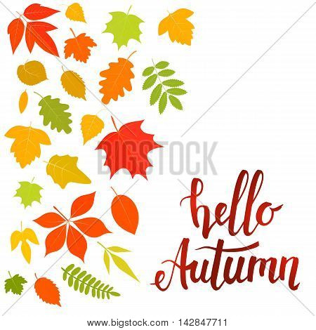Handwritten lettering Hello autumn with yellow leaves. Vector stock illustration.