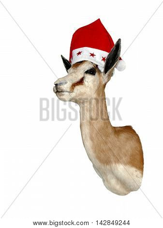 Shoulder mounted deer head taxidermy wearing red Xmas hat