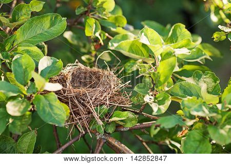 Empty bird nest on a tree branch covered with green leaves copy space