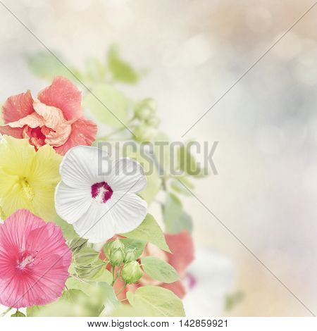 Colorful Hibiscus flowers for background