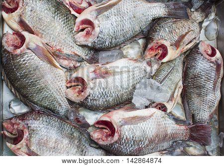 fish, fish Folk, Fish market, food, freshwater fish, Frozen fish, Raw food, top camera