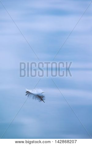 Single white fallen feather floating in water