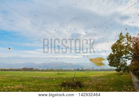 Landscape with the leaf fall. Balkans mountine are on the background. Bulgaria Sofia.
