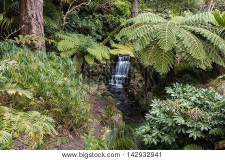 rainforest in New Zealand with ferns and waterfall