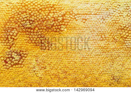 Fragment of honeycomb with full cells. Newly pulled honey bee honeycomb beeswax on plastic foundation with pollen tracks. Honeycomb background. Sweet fresh honey in honeycomb frame