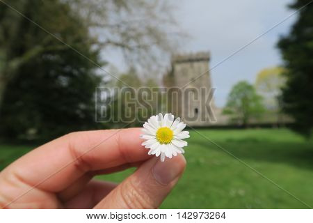 A hand holding a little flower and a castle and a lot of green on the background. That photo was taken at Blarney, Ireland April/2016.