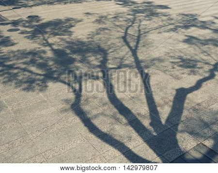 Tree Branches shadow on Floor Nature Abstract background