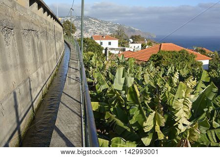 Levada irrigation channel with footpath through banana plantation on outskirts of Funchal Madeira Portugal
