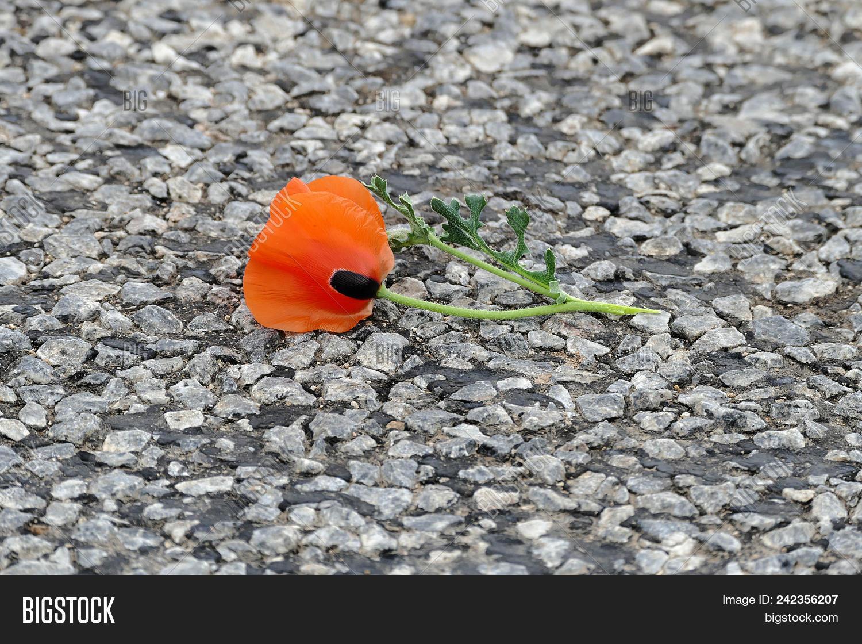 Naturel Poppyspring Image Photo Free Trial Bigstock