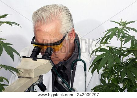 Cannabis Research Scientist examines and researches the benefits of Pharmaceutical Grade Cannabis for the Health Care and Science Industry.