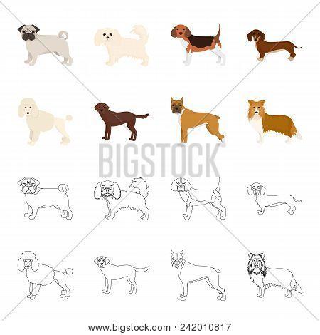 Dog Breeds Cartoon, Outline Icons In Set Collection For Design.dog Pet Vector Symbol Stock  Illustra