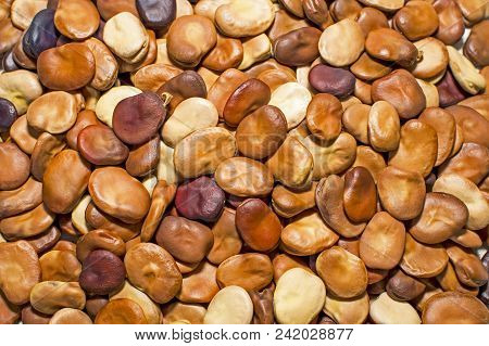 Beans Are The Dried Seeds Closeup. Background