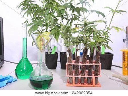 Marijuana Science Lab with Beakers, Marijuana Plants, Chemicals, Computers, Microscopes, Test Tubes, and more.