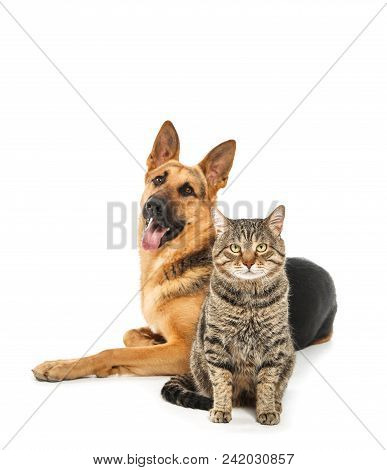Adorable Cat And Dog On White Background. Animal Friendship