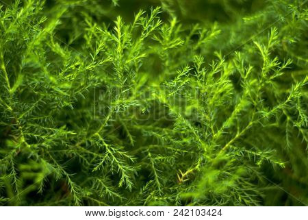 Blurred Green Abstract Floral Background Of Natural Twigs Of Tropical Plants With Tiny Leaves, Remin