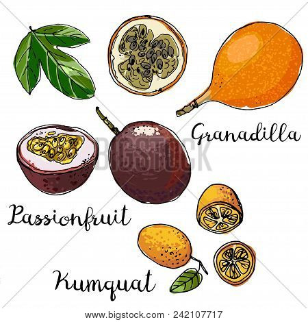 Granadilla, Passionfruit, Kumquat. Fruits Drawn By A Line On A White Background. Fruits From Thailan