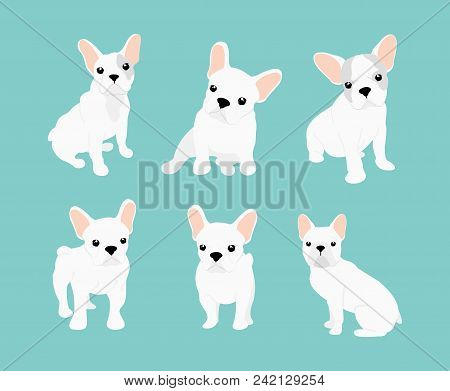 Vector Illustrations Set Of Cute Little White French Bulldog. Happy And Funny Pictures Of Bulldog Pu