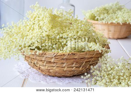 Fresh Elder Flowers In A Basket On A White Background
