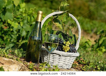 Harvest And Wine