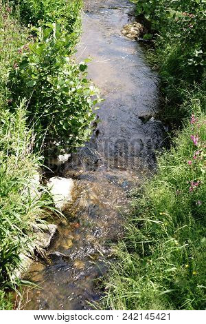 A Narrow Clear Stream With Wild Meadows, Wild Herbs And Wildflowers On Its Shore.
