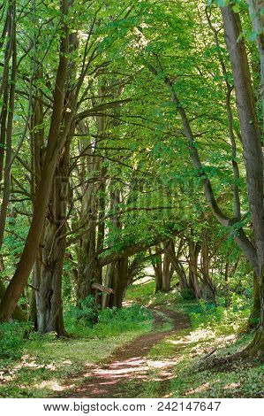 A Beautiful Path In The Summer Forest, A Path In The Spring Forest, A Forest Path Between The Trees