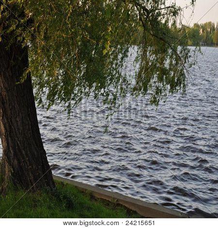 Lake on Spring