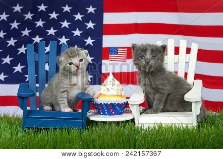 Adorable Small Fluffy Grey Kitten Sitting On A White Chair, Grey And White Tabby On Blue Chair In Gr