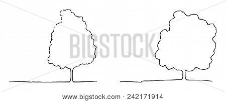 Monochrome Trees Silhouette Contour Line Art Sketch Isolated Vector