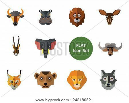 Animal Faces Icon Set. Lion Head Zebra Hippo Head Giraffe Face Lion Face Wolf Elephant Head Antelope