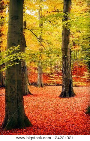 Forest in autumn color