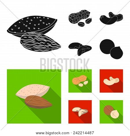 Peanuts, Cashews, Brazil Nuts, Macadamia.different Kinds Of Nuts Set Collection Icons In Black, Flat