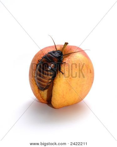 Cockroach And Apple