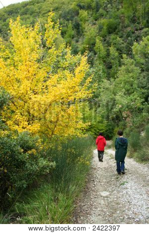 Walking Down The Mountain Road