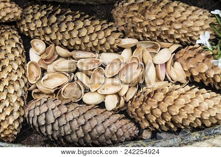 Cedar Nut, Pine Cone Green. Pine Nut, Pine Lump, Cedar Wood. Cedar Branch. Woodland Cedarwood. Chris