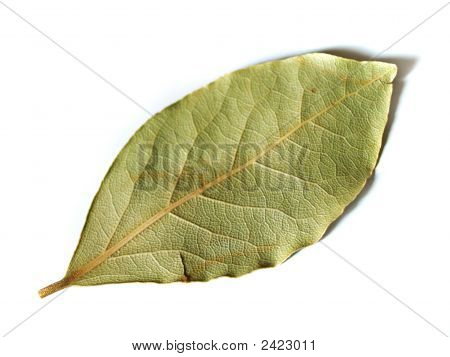 One Bay Leaf On A White