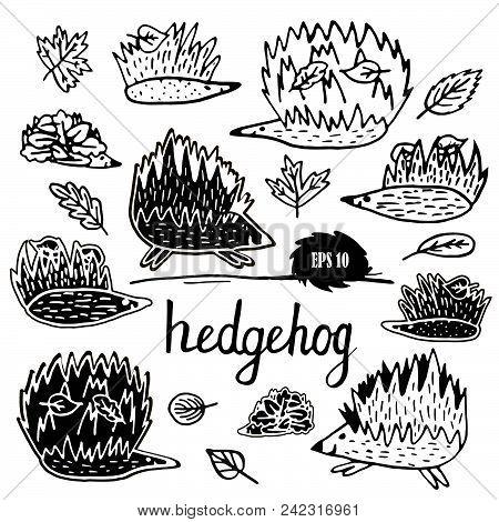 Hedgehog. Animals Single Icon In Cartoon Style Vector Symbol Stock Illustration Web.