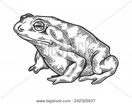 Hallucinogenic Toad Animal Engraving Vector Illustration. Scratch Board Style Imitation. Black And W